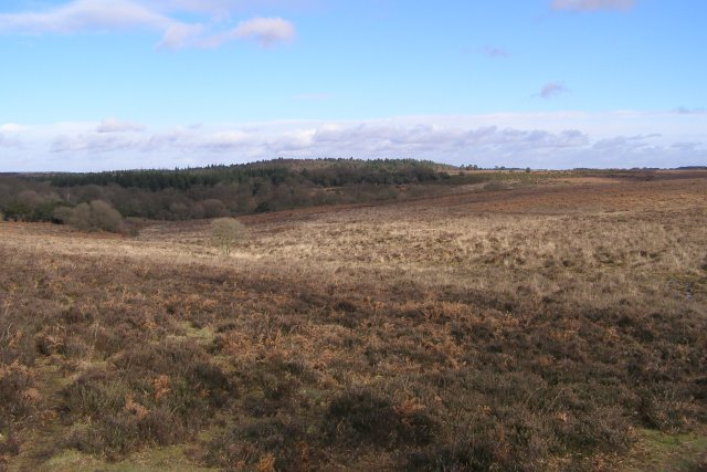 Broomy Bottom, New Forest