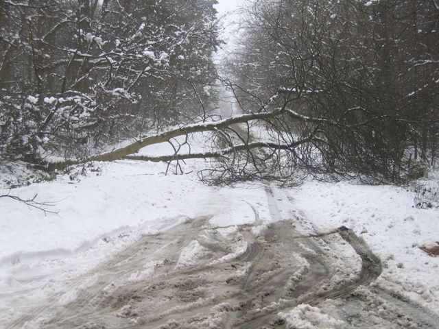 Road Closed at Rough Piece Wood