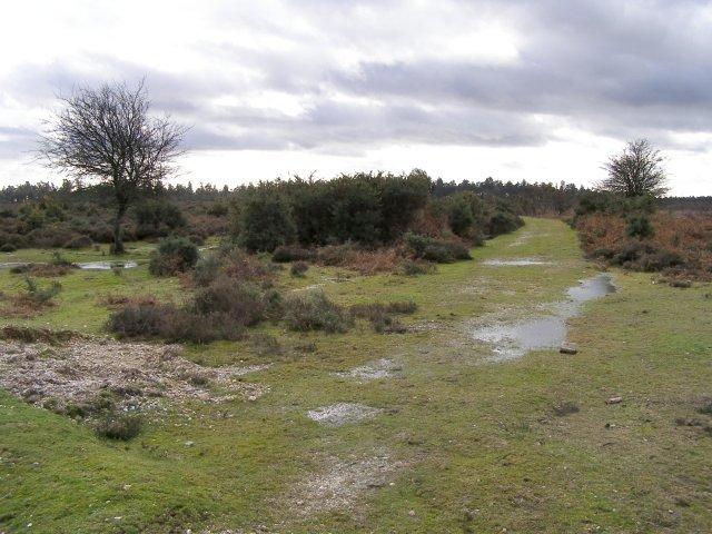 Path across Broomy Plain, New Forest