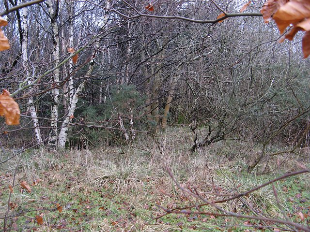 Chacefield Wood