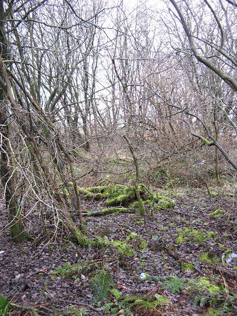 Woodland, Head of Muir