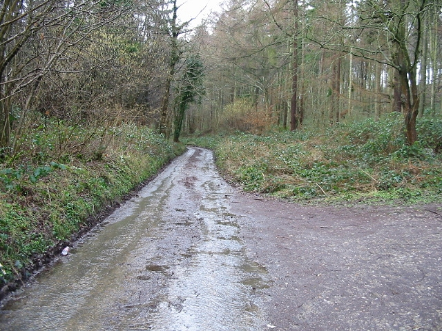 Road through Covert Wood