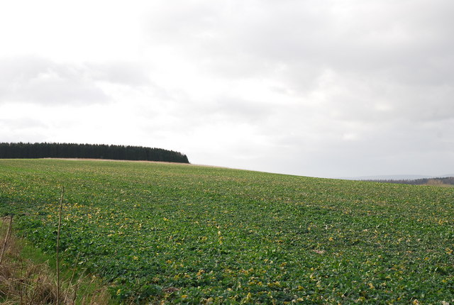Ansty Down