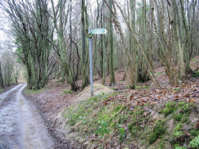 Footpath in Covert Woods