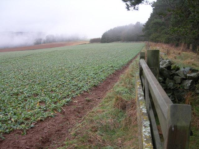 Farmland & Edge of Preston Plantation