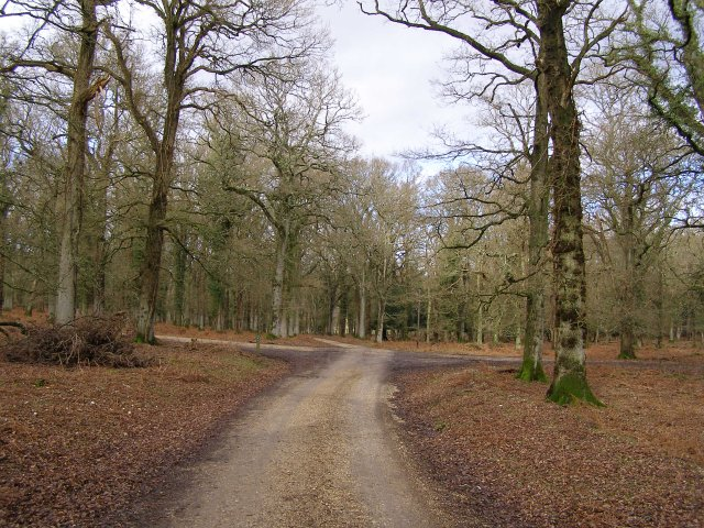 Track through Broomy Inclosure, New Forest