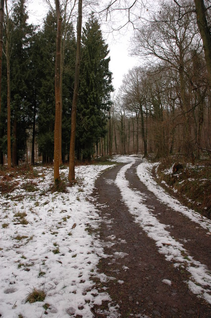 Forest track through Burghope Wood