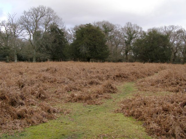 Clearing in the woods, Sloden, New Forest