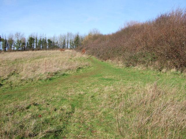 Scott's Meadow