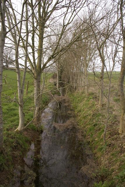 Tree lined stream