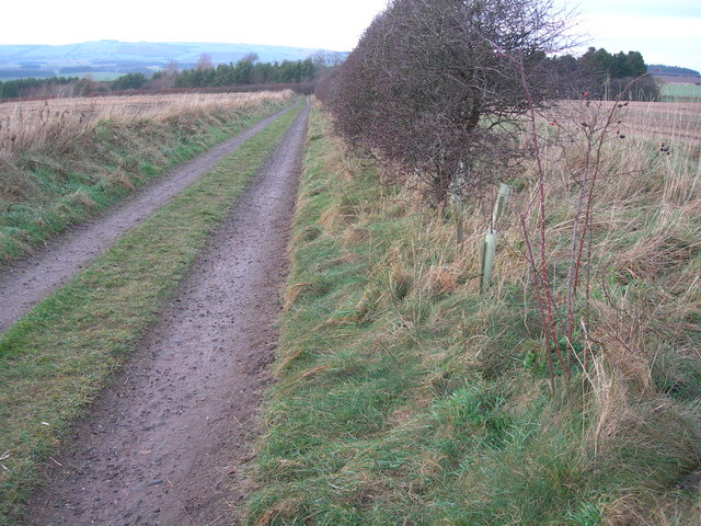 Track & Plantation