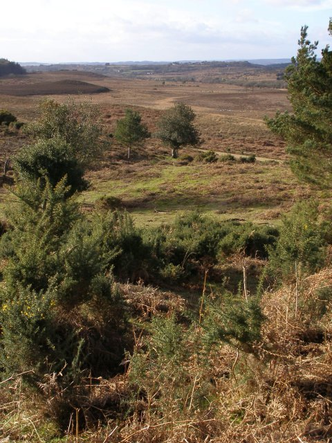 View across Watergreen Bottom, New Forest