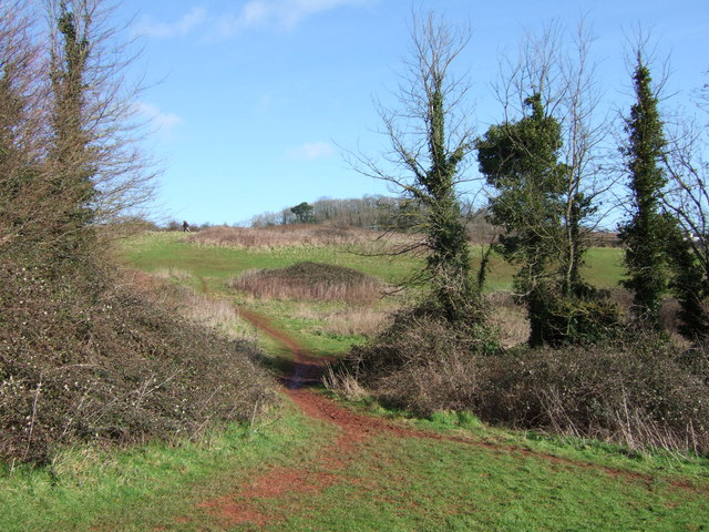 Scott's Meadow