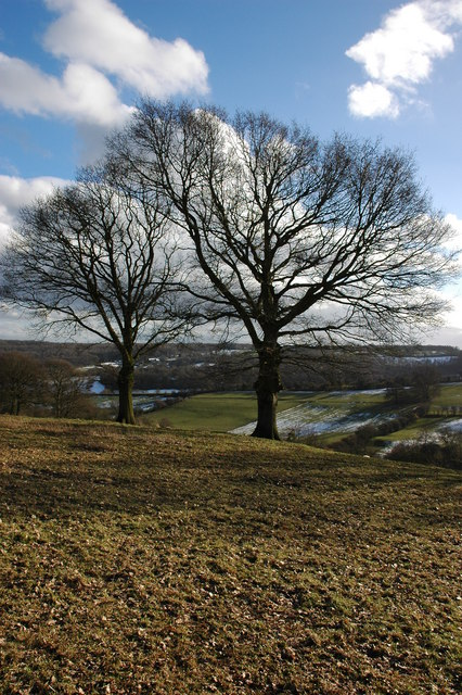 Trees above Hope under Dinmore