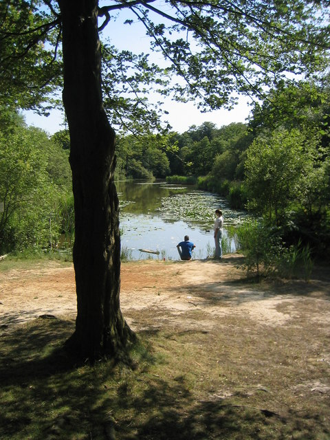 Wake Pond, Epping Forest
