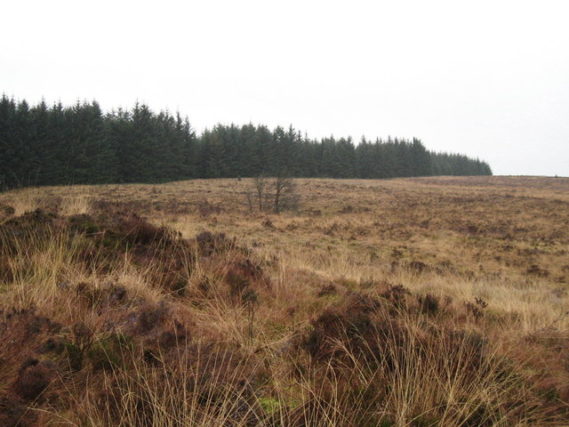 Moorland and Forest Edge