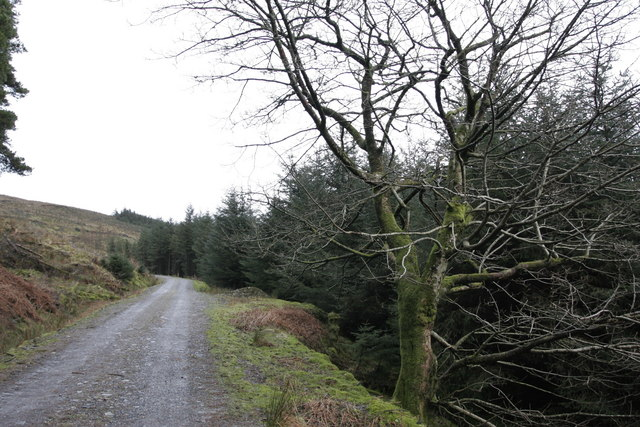 On the forestry road between Innellan and Auchafour