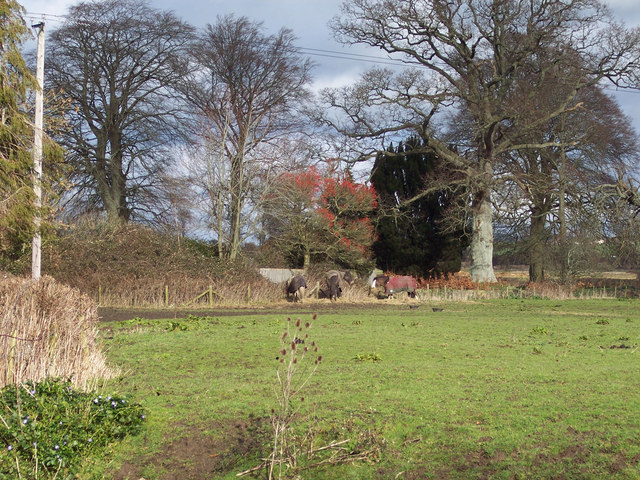 Horses eating hay near Manston Church