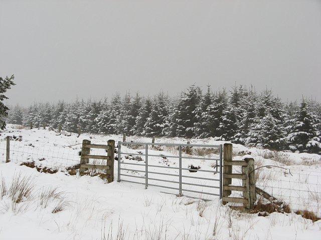 Forest edge, Kirkgate Hill
