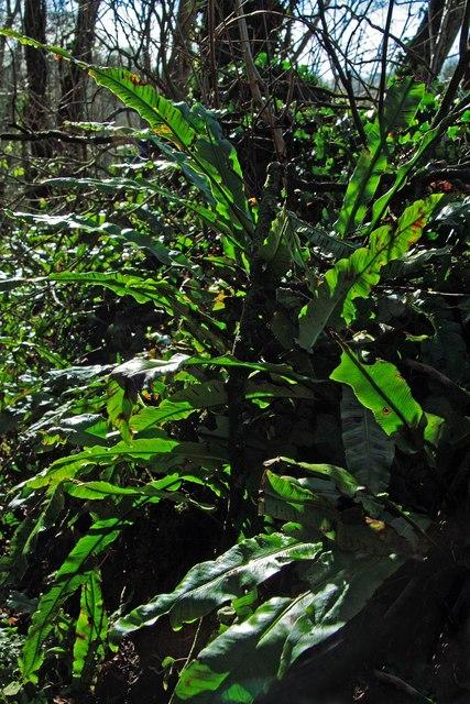 Ferns on by-way