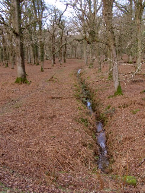Drain through Broomy Inclosure, New Forest