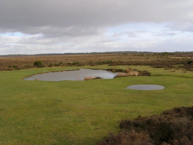 Small pond on Broomy Plain, New Forest