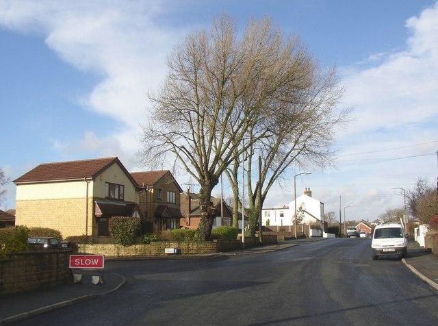 Trees, Sunny Bank Road, Mirfield