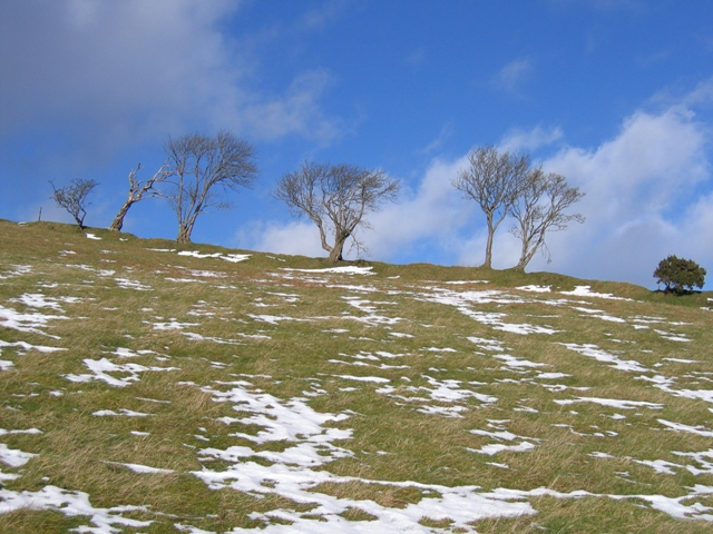 Windswept Trees near Banhadlen-uchaf