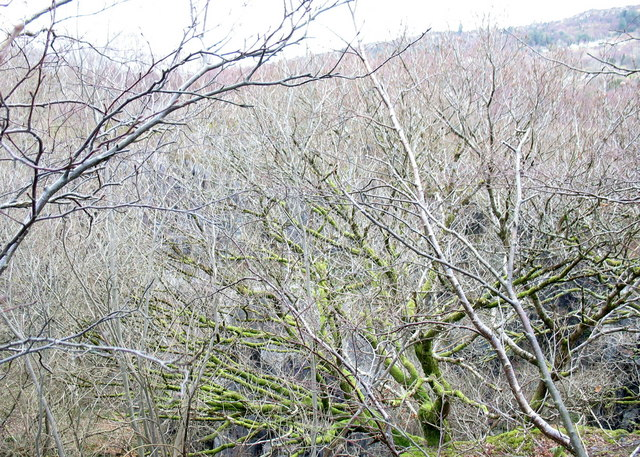 Woodland around the middle pit of the Lower Glynrhonwy Quarry