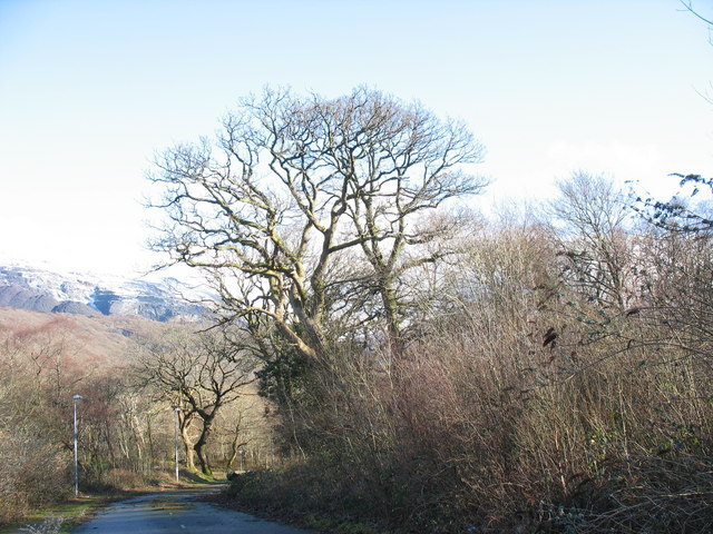 Ancient woodland at Glynrhonwy