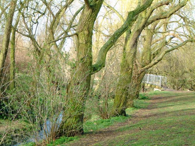 Knighton Park, the brook