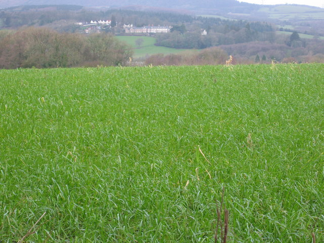 Field bordering Druidstone Road, St Mellons