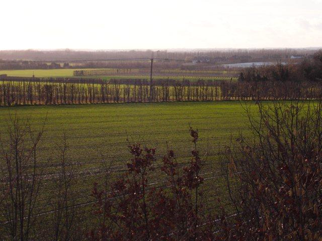 Farmland west of the Thanet Way