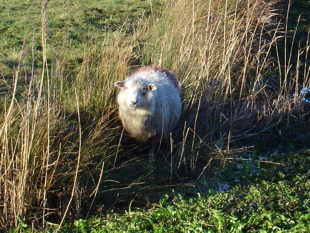 Got my eye on ewe
