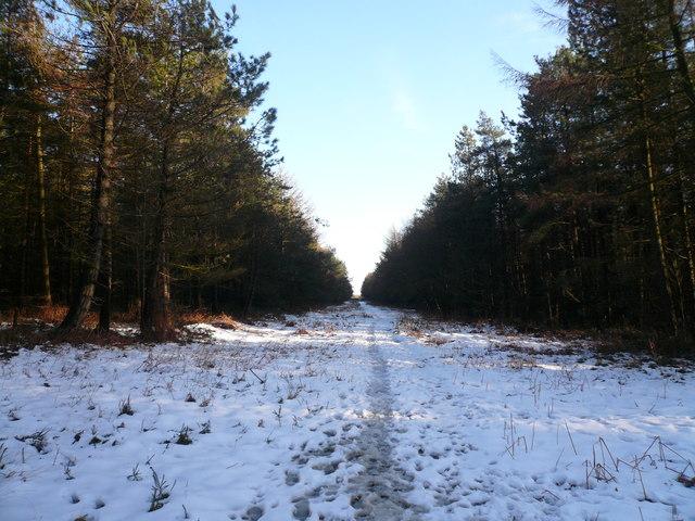Bottom Moor - Woodland Path