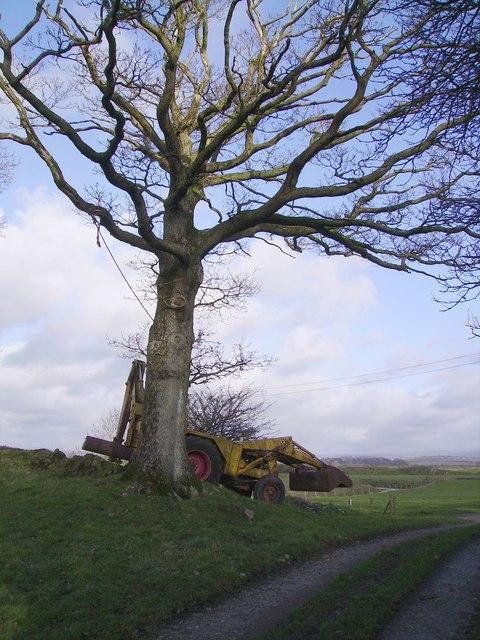 JCB and Tree
