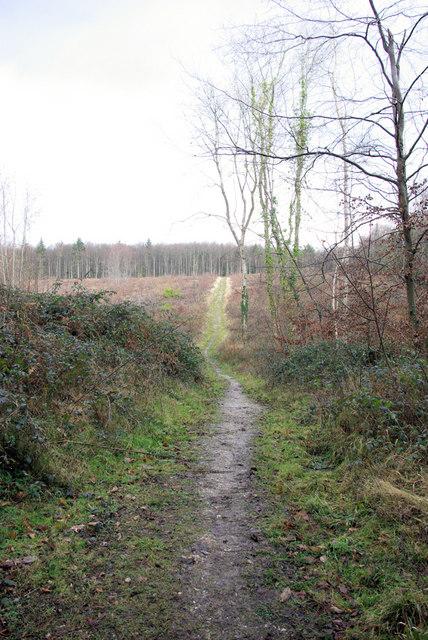 Path, Rewell Wood