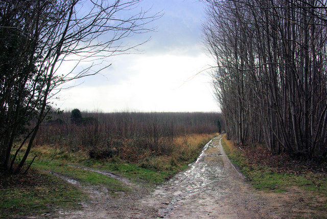 Track Junction, Rewell Wood