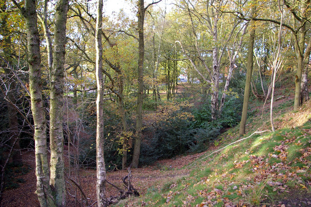 Woodland on north west end of Rednal Hill