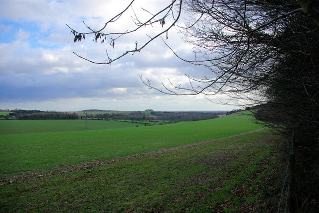 View from the Edge of Red Copse