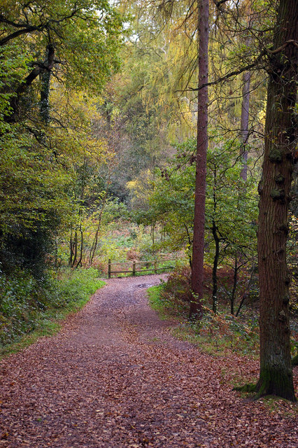 Bridleway below Cofton Hill, Lickey Hills Country Park