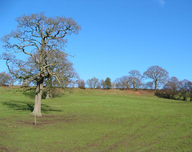 Pasture near Sandholes
