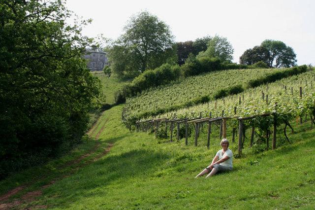 Vineyard and Sharpham House