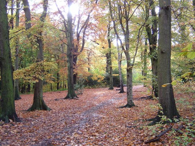 Scholes Wood