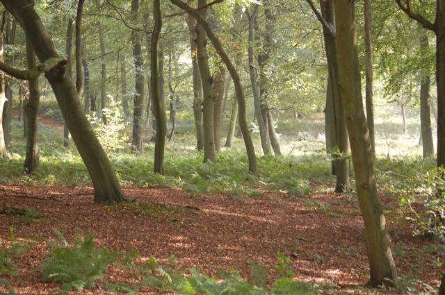Inside Bixmoor Wood