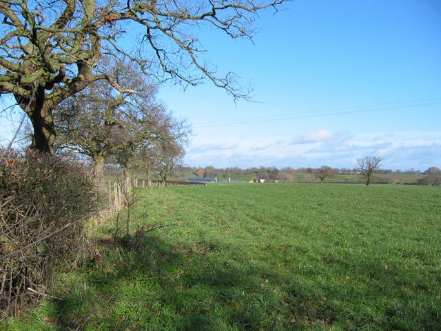 Pasture near Gipsy Corner