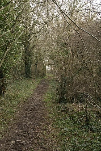 Bridleway from Great Coll Wood