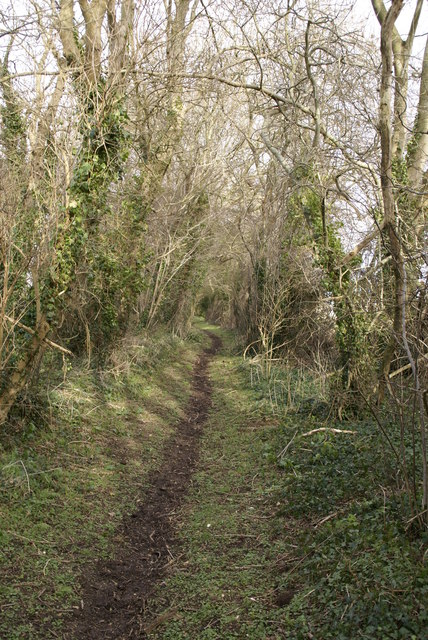Bridleway to Great Coll Wood