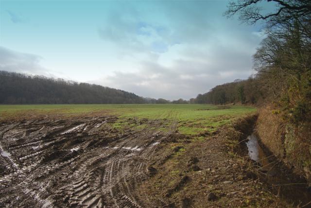 Long field 2