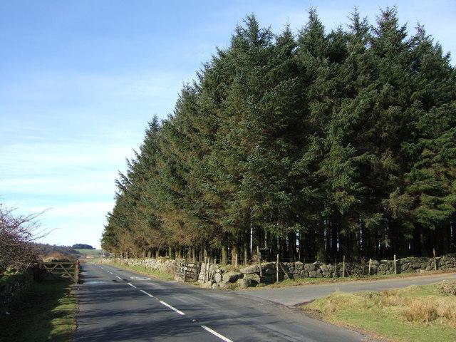 Long Plantation and the B3357
